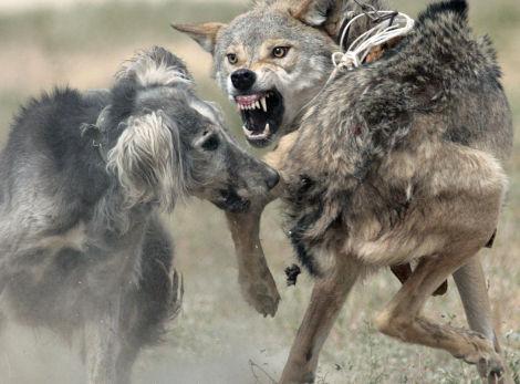 Ужасы про собак - Список лучших фильмов ужасов про собак
